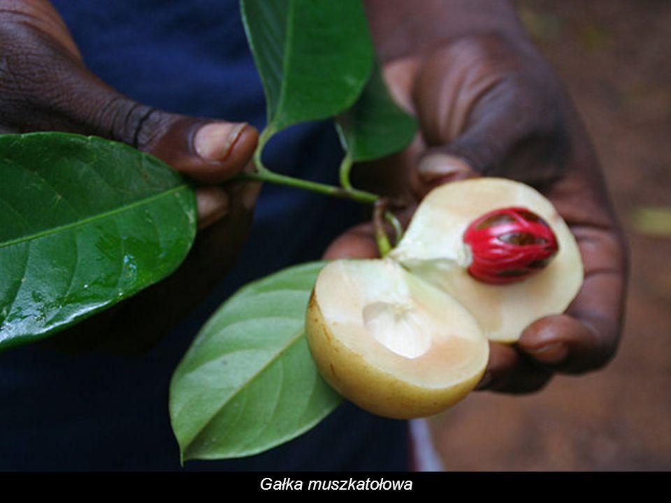 Zanzibar zajmuje obecnie 3. miejsce na świecie pod względem eksportu goździków.