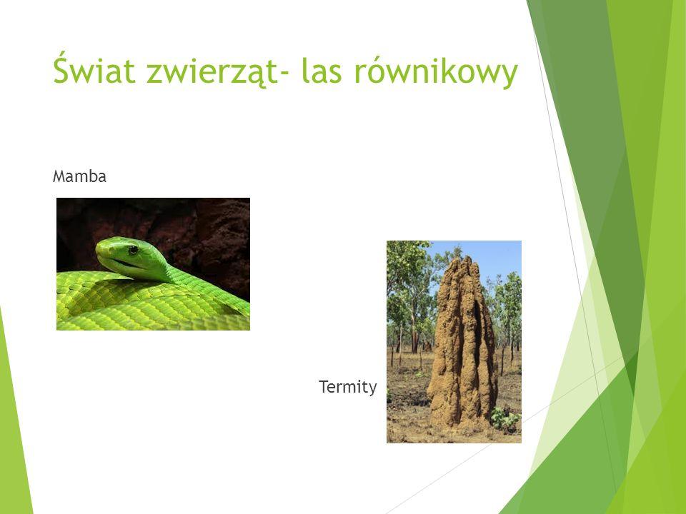 Świat zwierząt- las równikowy Mamba Termity