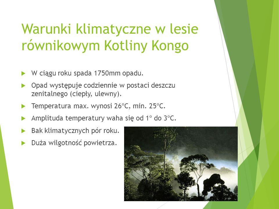 Warunki klimatyczne w lesie równikowym Kotliny Kongo W ciągu roku spada 1750mm opadu. Opad występuje codziennie w postaci deszczu zenitalnego (ciepły,