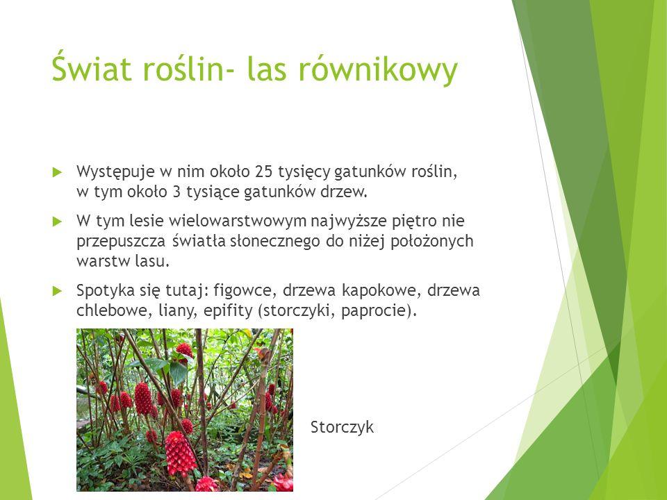 Świat roślin- las równikowy Występuje w nim około 25 tysięcy gatunków roślin, w tym około 3 tysiące gatunków drzew. W tym lesie wielowarstwowym najwyż