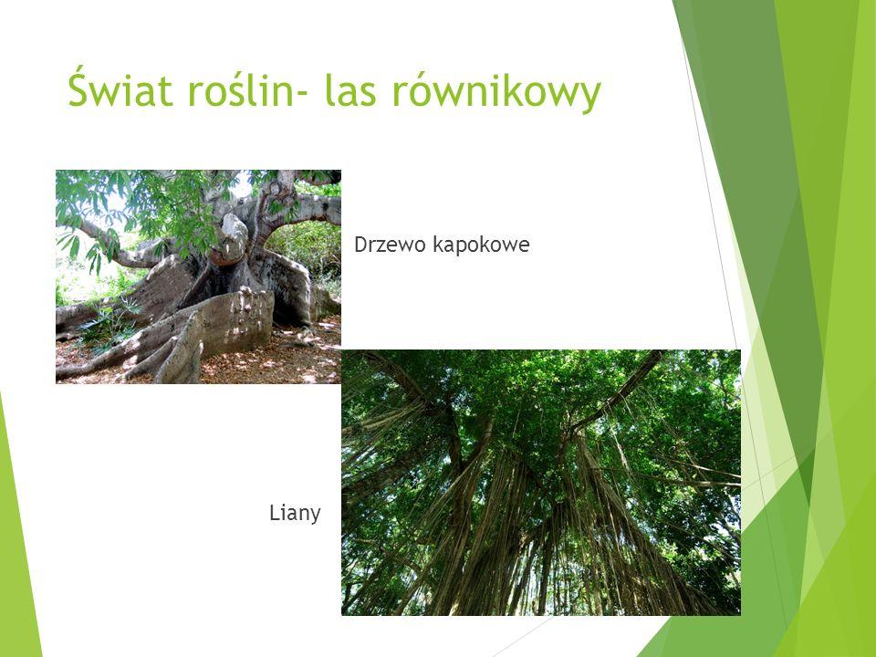 Świat roślin- las równikowy Drzewo kapokowe Liany