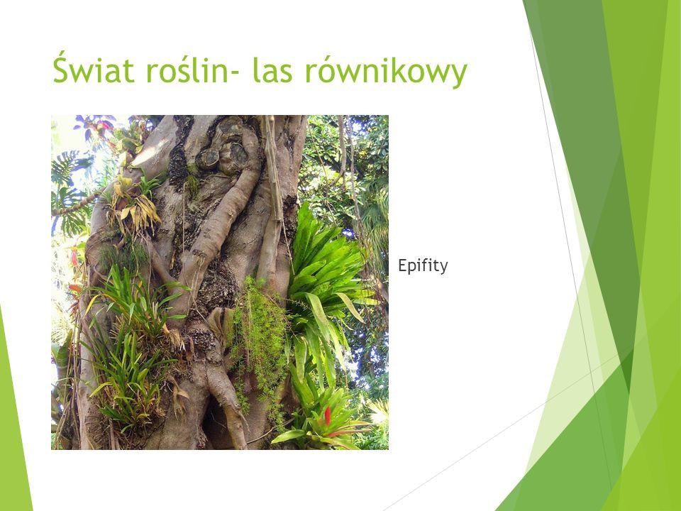 Świat roślin- las równikowy Epifity