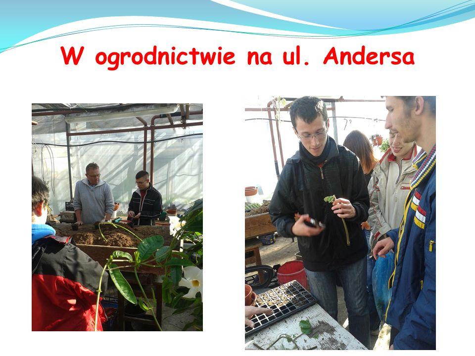 W ogrodnictwie na ul. Andersa