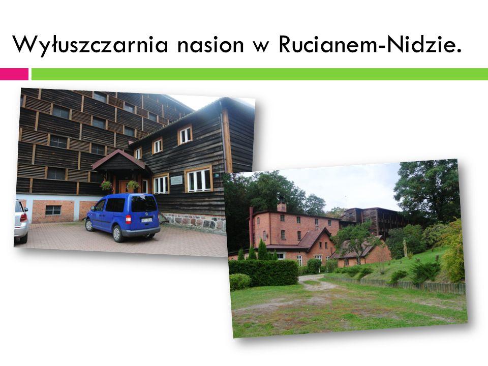 Wyłuszczarnia nasion w Rucianem-Nidzie.