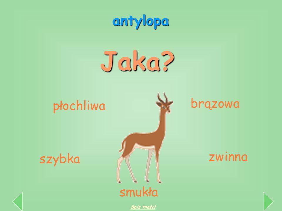Cechy zwierząt Cechy zwierząt Jaki? Jaka? Jakie? Jaki? Jaka? Jakie? duży kolorowa wesołe groźny piękna małe Jakie? Jakie? duże kolorowe wesołe groźne