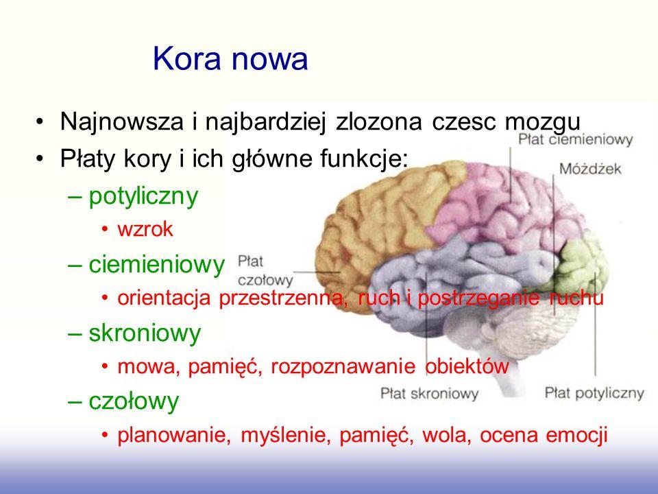 Najnowsza i najbardziej zlozona czesc mozgu Płaty kory i ich główne funkcje: –potyliczny wzrok –ciemieniowy orientacja przestrzenna, ruch i postrzegan