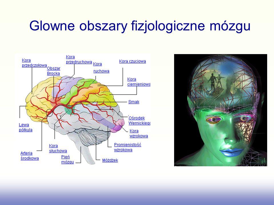Glowne obszary fizjologiczne mózgu