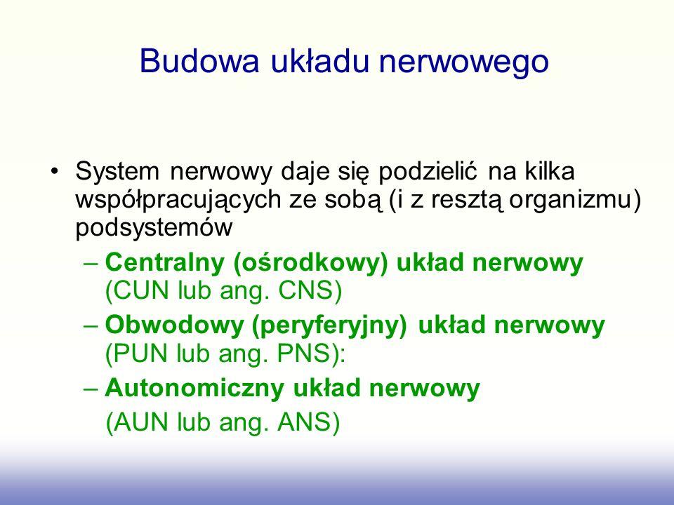 System nerwowy daje się podzielić na kilka współpracujących ze sobą (i z resztą organizmu) podsystemów –Centralny (ośrodkowy) układ nerwowy (CUN lub a