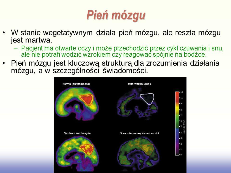 W stanie wegetatywnym działa pień mózgu, ale reszta mózgu jest martwa. –Pacjent ma otwarte oczy i może przechodzić przez cykl czuwania i snu, ale nie