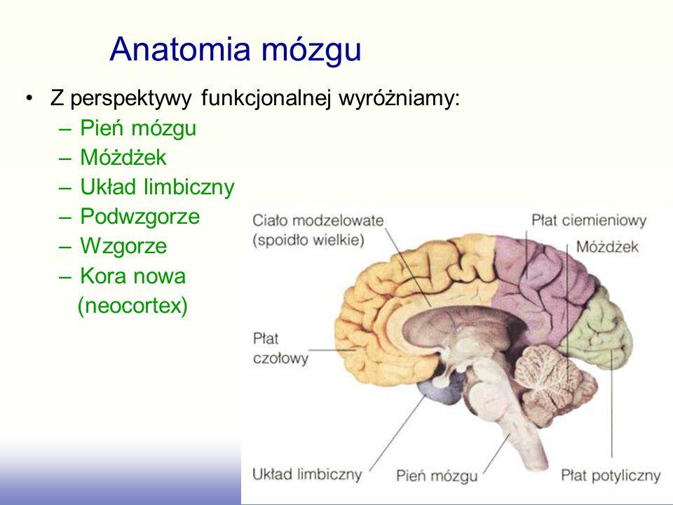 Z perspektywy funkcjonalnej wyróżniamy: –Pień mózgu –Móżdżek –Układ limbiczny –Podwzgorze –Wzgorze –Kora nowa (neocortex) Anatomia mózgu