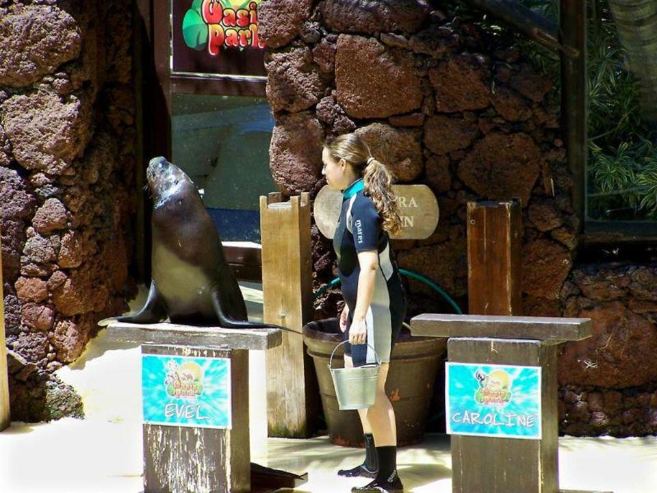 Tu odbywają się pokazy lwów morskich