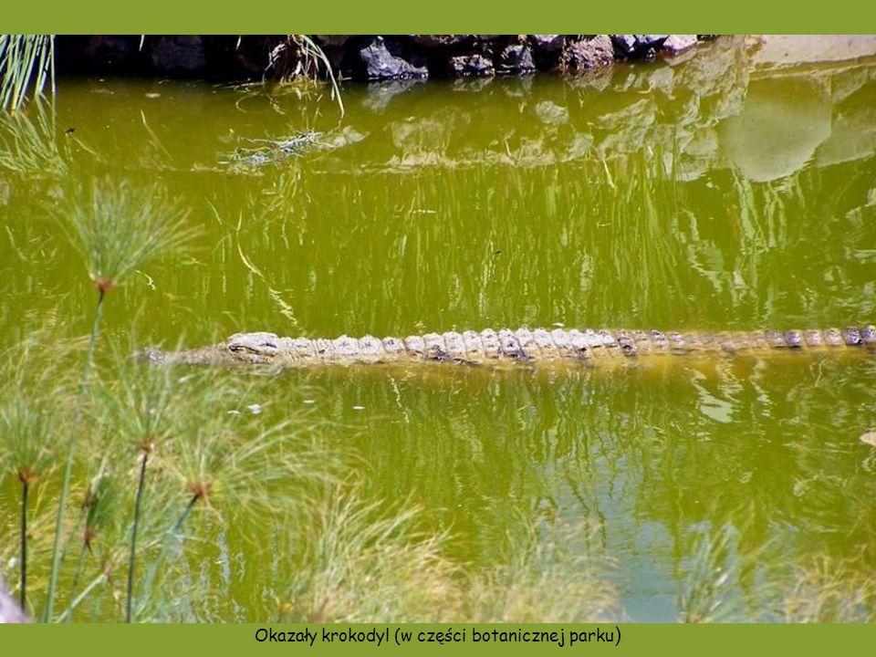 Nietypowe miejsce postoju starego statku. W wodzie i na brzegach stawu sporo krokodyli.