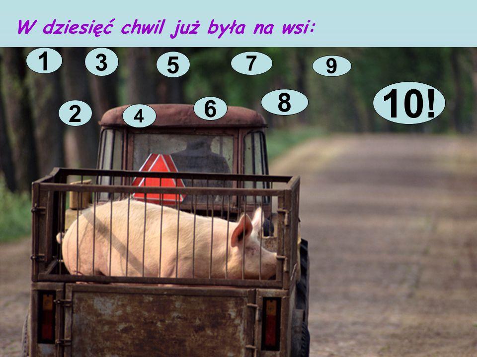 W dziesięć chwil już była na wsi: 1 2 3 4 5 6 7 8 9 10!