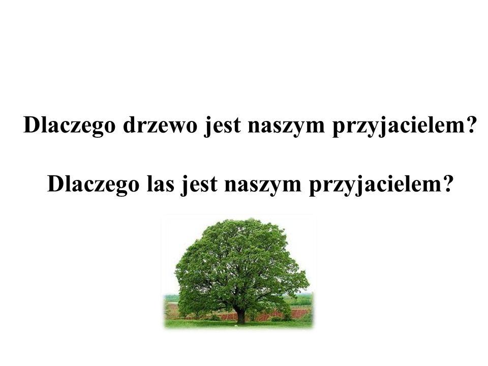 Każdy gatunek drzewa jest bezcenny dla człowieka.