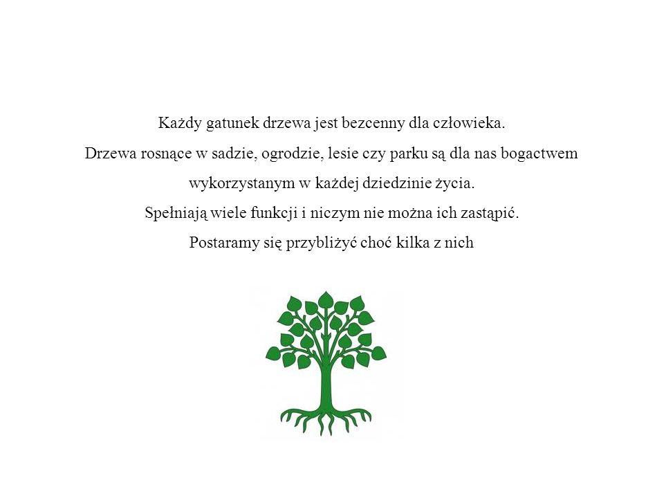 Każdy gatunek drzewa jest bezcenny dla człowieka. Drzewa rosnące w sadzie, ogrodzie, lesie czy parku są dla nas bogactwem wykorzystanym w każdej dzied