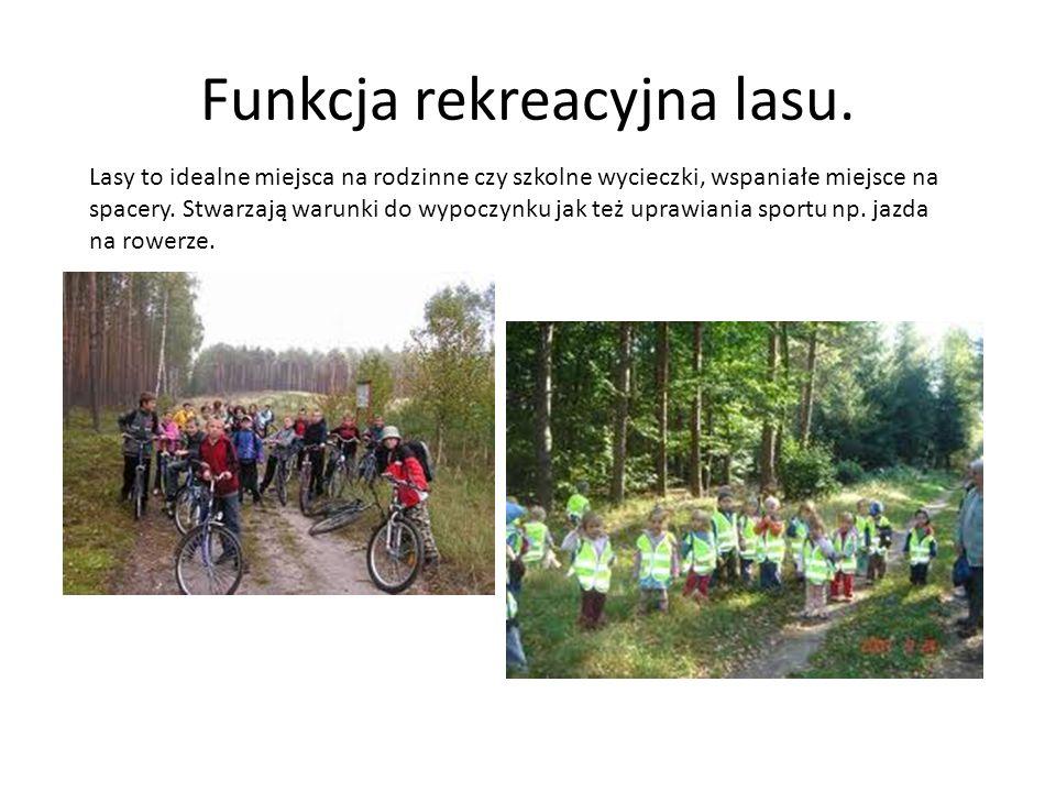 Funkcja rekreacyjna lasu. Lasy to idealne miejsca na rodzinne czy szkolne wycieczki, wspaniałe miejsce na spacery. Stwarzają warunki do wypoczynku jak