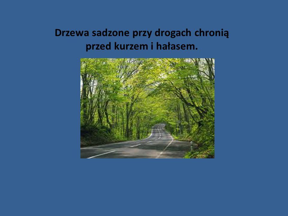 Drzewa sadzone przy drogach chronią przed kurzem i hałasem.