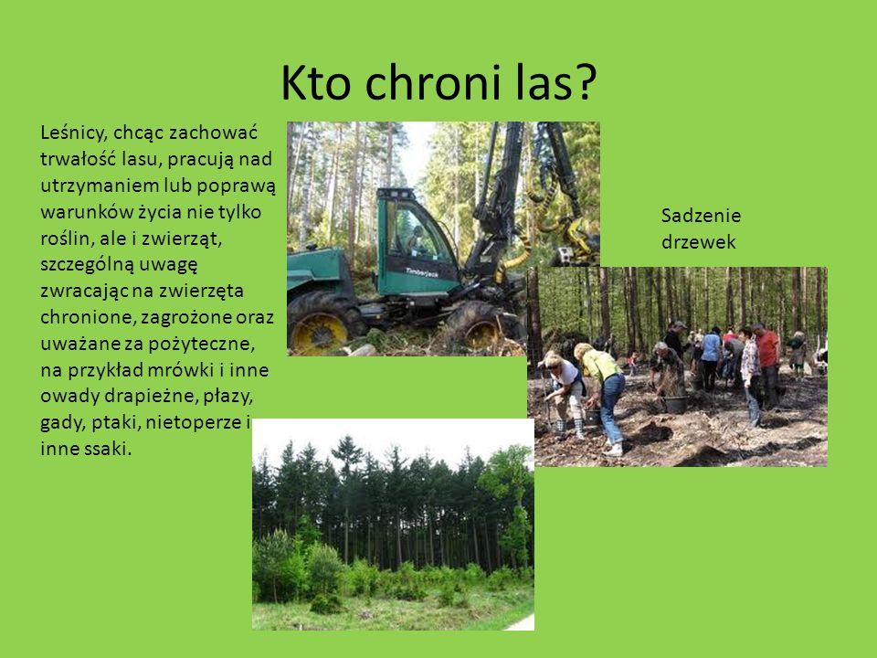 Kto chroni las? Leśnicy, chcąc zachować trwałość lasu, pracują nad utrzymaniem lub poprawą warunków życia nie tylko roślin, ale i zwierząt, szczególną