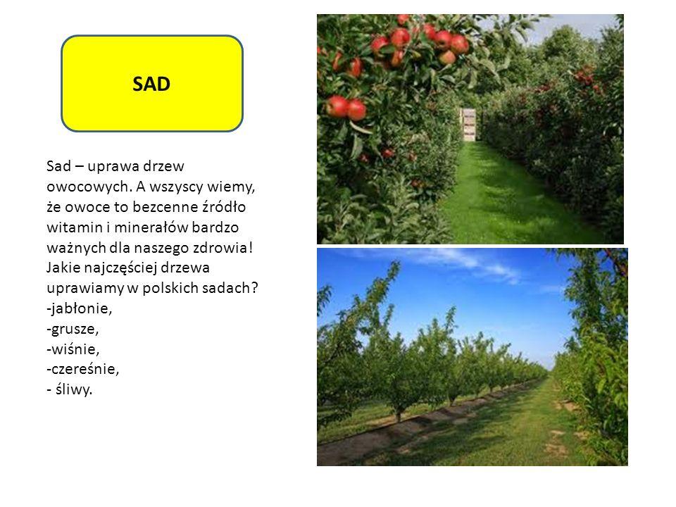 SAD Sad – uprawa drzew owocowych. A wszyscy wiemy, że owoce to bezcenne źródło witamin i minerałów bardzo ważnych dla naszego zdrowia! Jakie najczęści