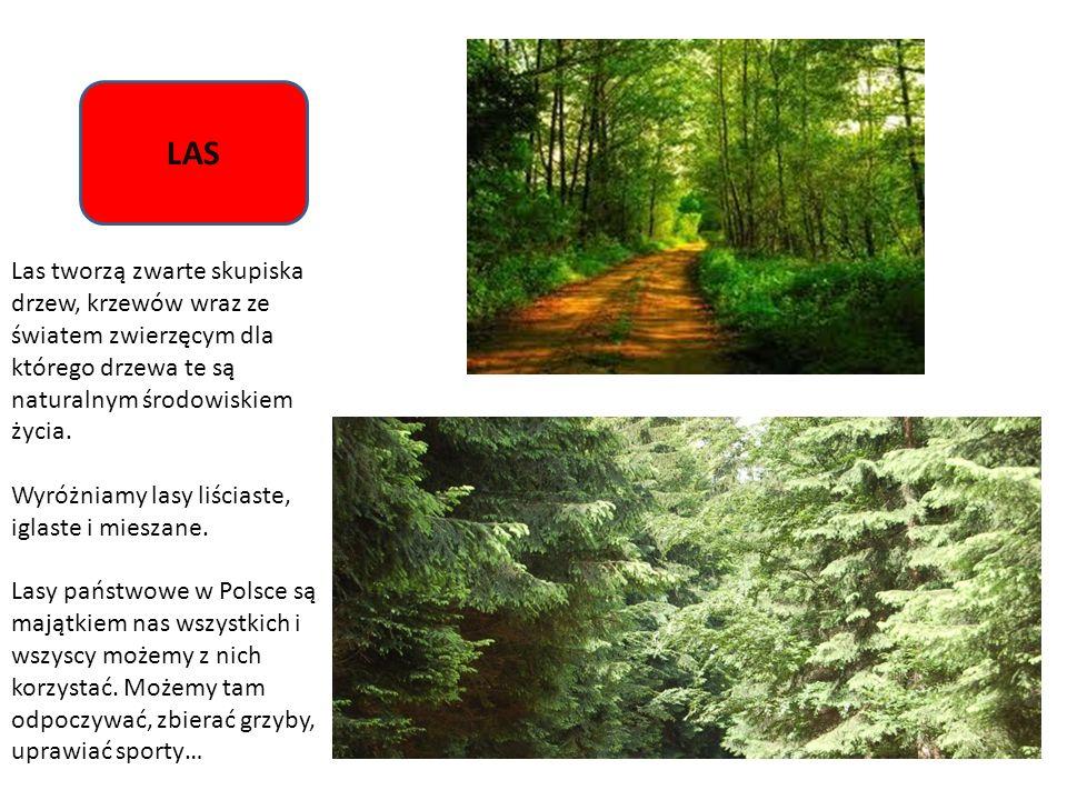 LAS Las tworzą zwarte skupiska drzew, krzewów wraz ze światem zwierzęcym dla którego drzewa te są naturalnym środowiskiem życia. Wyróżniamy lasy liści
