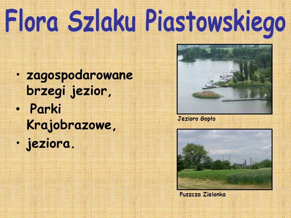 zagospodarowane brzegi jezior, Parki Krajobrazowe, jeziora. Jezioro Gopło Puszcza Zielonka