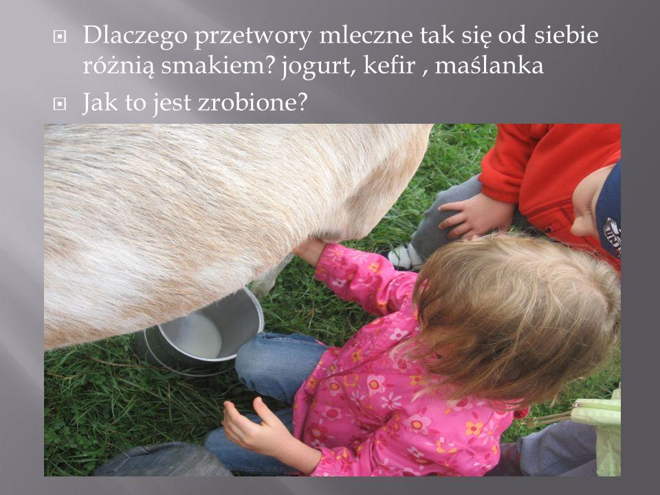 Dlaczego przetwory mleczne tak się od siebie różnią smakiem? jogurt, kefir, maślanka Jak to jest zrobione?