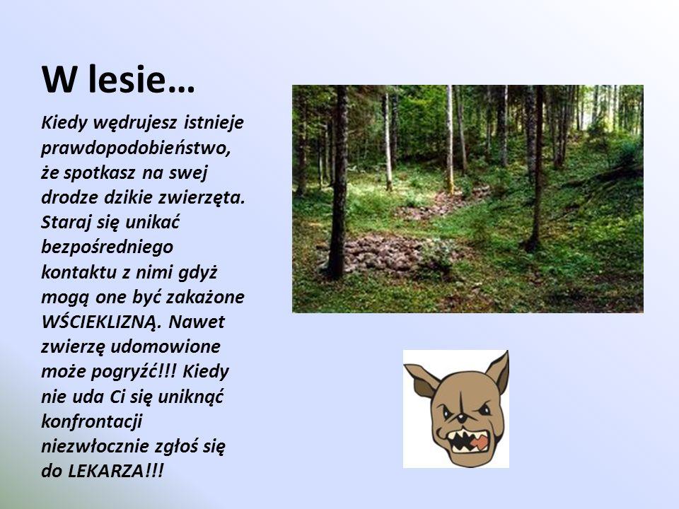 W lesie… Kiedy wędrujesz istnieje prawdopodobieństwo, że spotkasz na swej drodze dzikie zwierzęta. Staraj się unikać bezpośredniego kontaktu z nimi gd