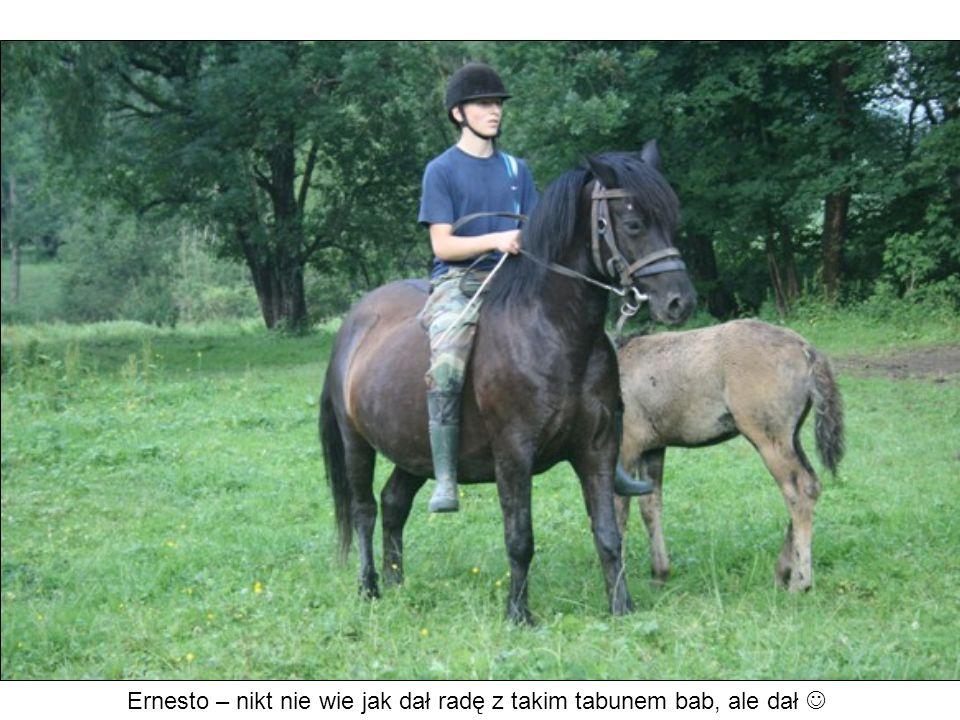 Ernesto – nikt nie wie jak dał radę z takim tabunem bab, ale dał