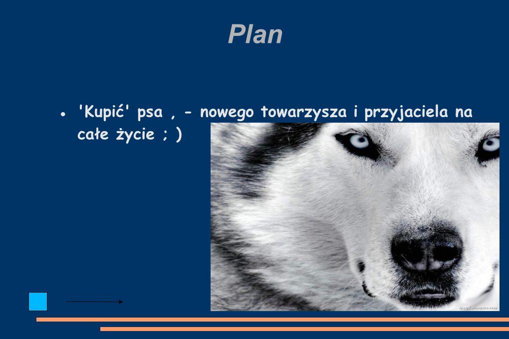 Plan Kupić psa, - nowego towarzysza i przyjaciela na całe życie ; )