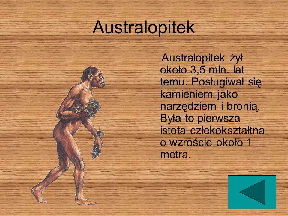 Australopitek Australopitek żył około 3,5 mln.lat temu.