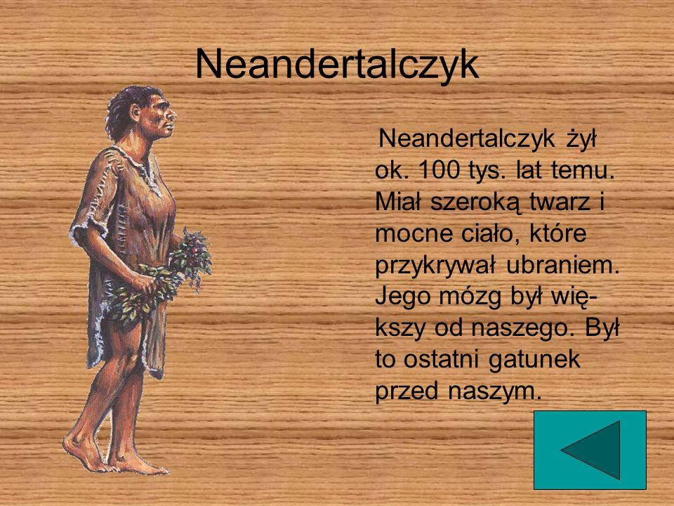 Neandertalczyk Neandertalczyk żył ok.100 tys. lat temu.