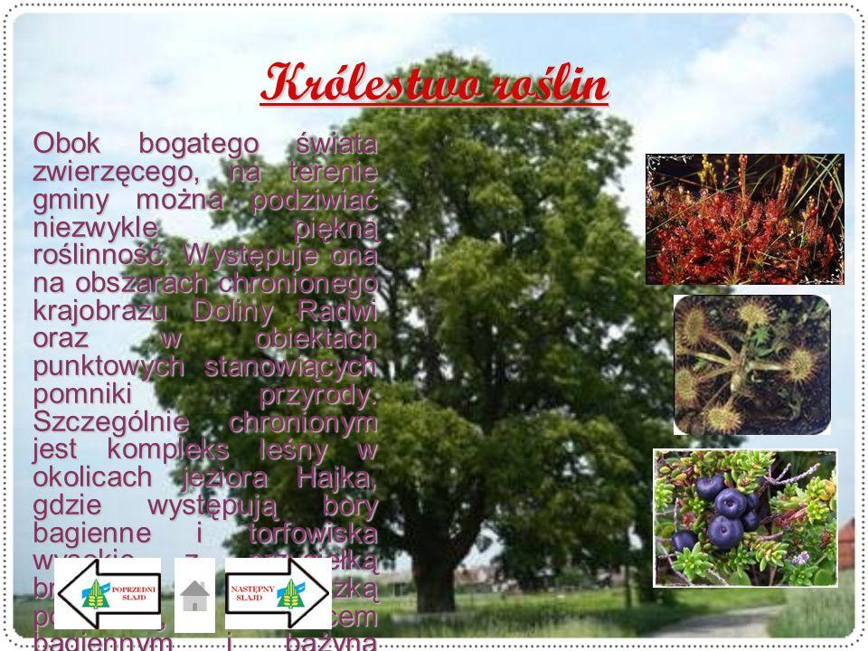 Królestwo ro ś lin Obok bogatego świata zwierzęcego, na terenie gminy można podziwiać niezwykle piękną roślinność. Występuje ona na obszarach chronion