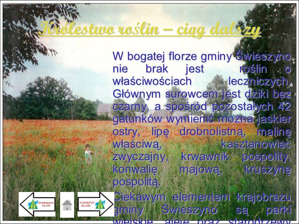 Królestwo ro ś lin – ci ą g dalszy W bogatej florze gminy Świeszyno nie brak jest roślin o właściwościach leczniczych. Głównym surowcem jest dziki bez