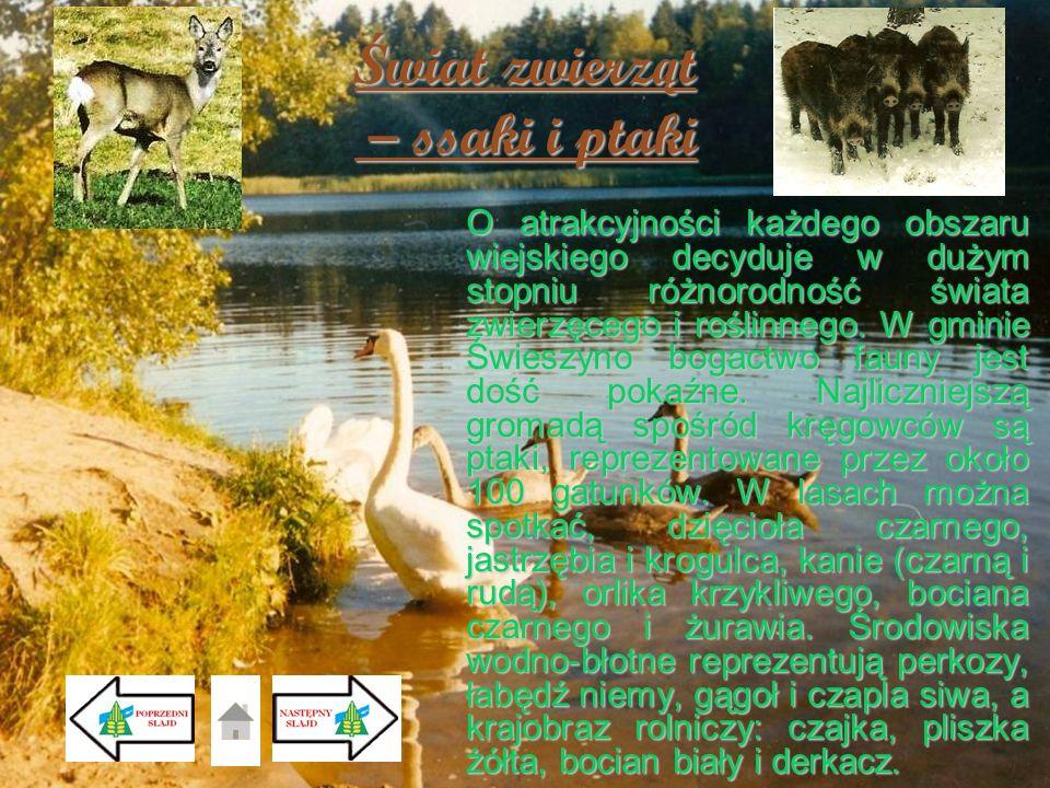 Ś wiat zwierz ą t – ssaki i ptaki O atrakcyjności każdego obszaru wiejskiego decyduje w dużym stopniu różnorodność świata zwierzęcego i roślinnego. W