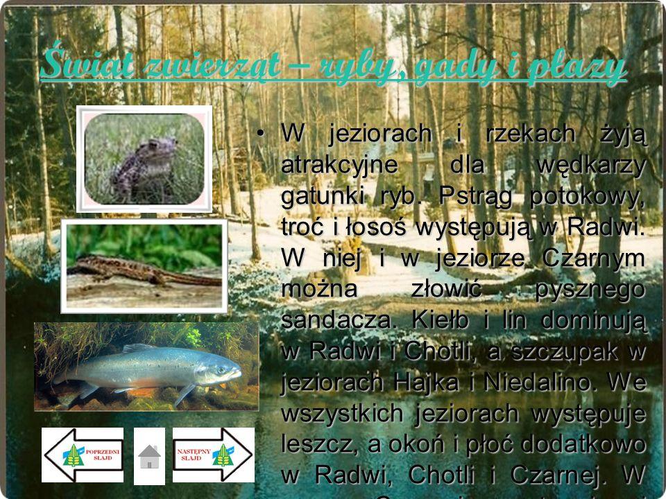 Świat zwierząt – ryby, gady i płazy W jeziorach i rzekach żyją atrakcyjne dla wędkarzy gatunki ryb. Pstrąg potokowy, troć i łosoś występują w Radwi. W