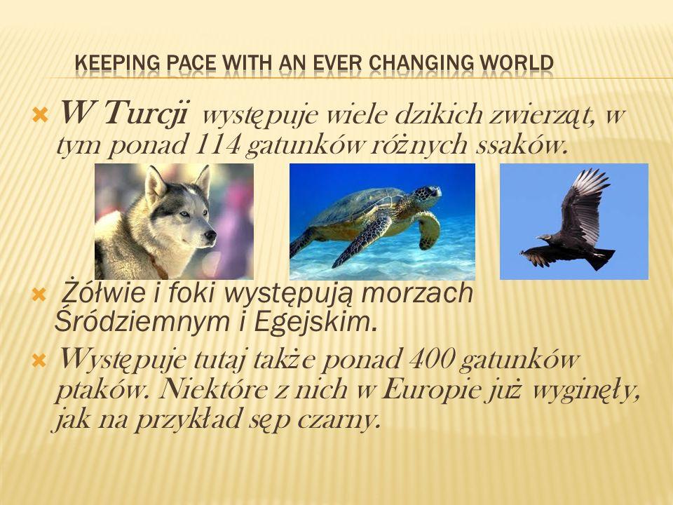 W Turcji wyst ę puje wiele dzikich zwierz ą t, w tym ponad 114 gatunków ró ż nych ssaków. Żółwie i foki występują morzach Śródziemnym i Egejskim. Wyst