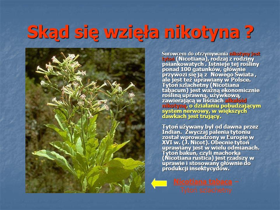 Alkaloid - nikotyna Nikotyna, NC5H4-C4H7N-CH3, 1-metylo-2-(ß- pirydylo)-pirolidyna to alkaloid występujący w liściach i korzeniach tytoniu.