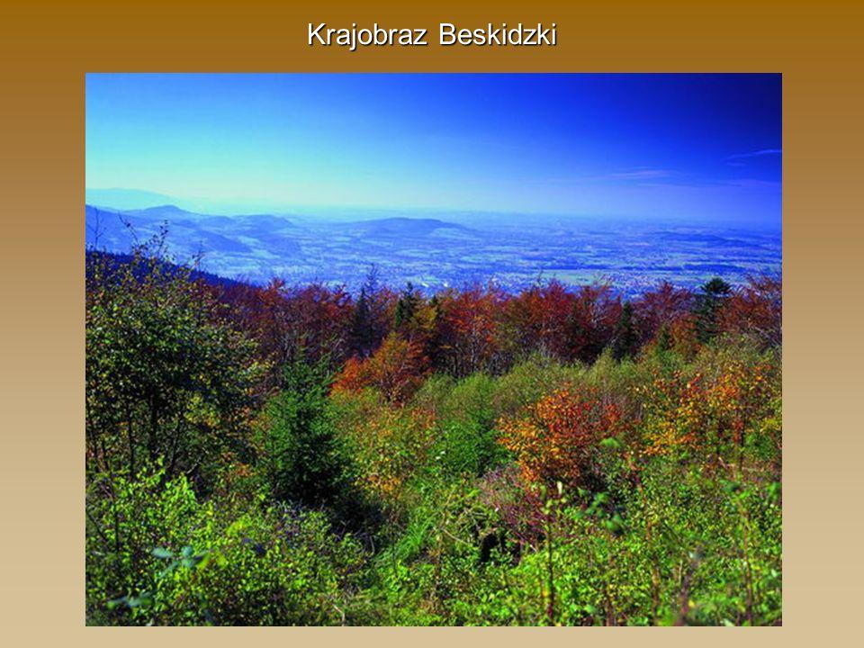 Krajobraz Beskidzki