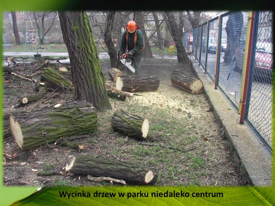 Wycinka drzew w parku niedaleko centrum