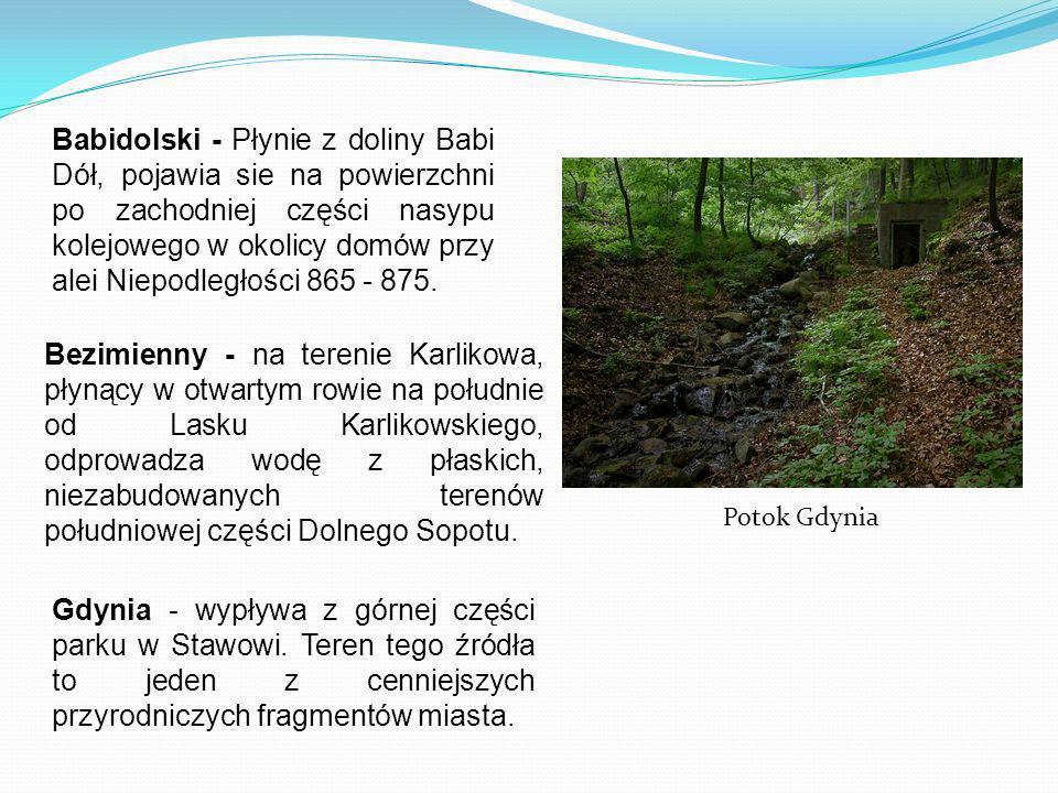 Babidolski - Płynie z doliny Babi Dół, pojawia sie na powierzchni po zachodniej części nasypu kolejowego w okolicy domów przy alei Niepodległości 865