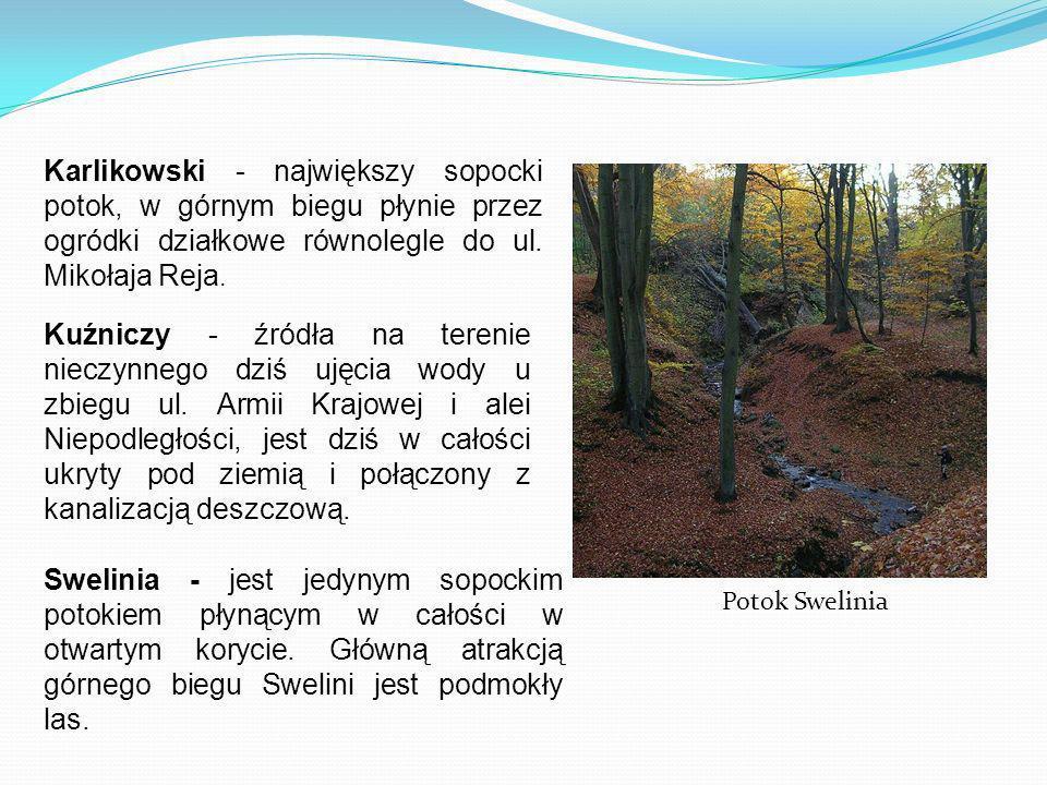 Karlikowski - największy sopocki potok, w górnym biegu płynie przez ogródki działkowe równolegle do ul. Mikołaja Reja. Kuźniczy - źródła na terenie ni