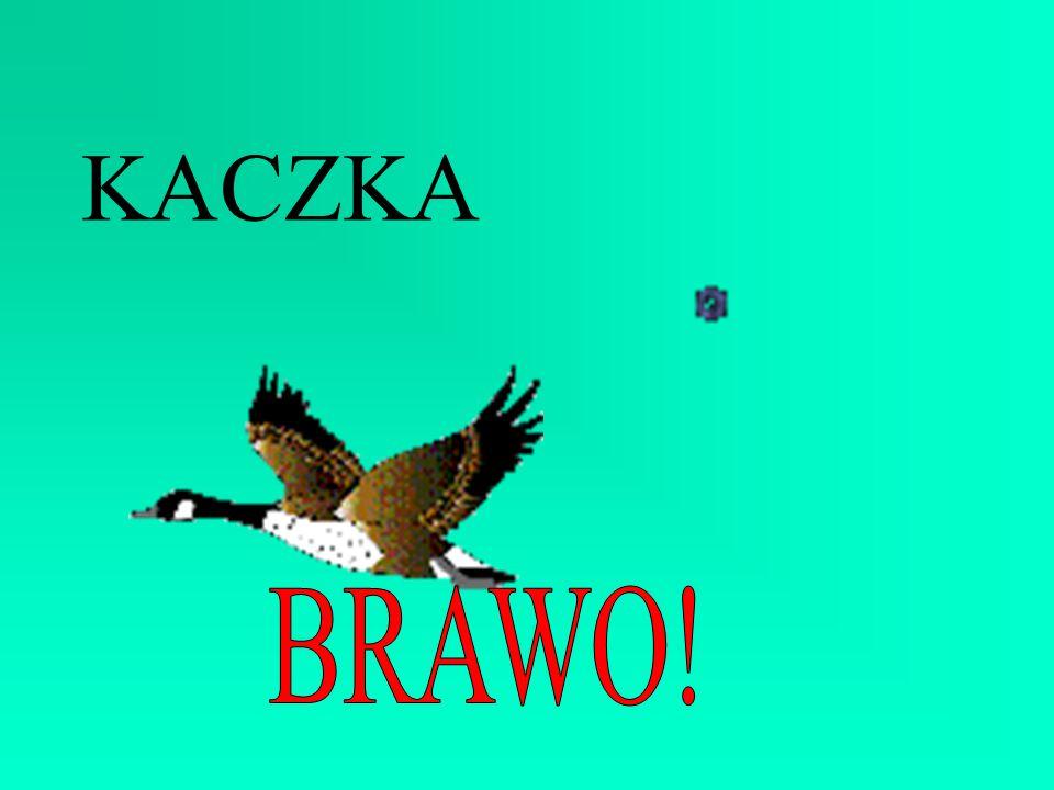 KACZKA