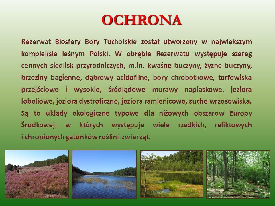 OCHRONA Rezerwat Biosfery Bory Tucholskie został utworzony w największym kompleksie leśnym Polski. W obrębie Rezerwatu występuje szereg cennych siedli