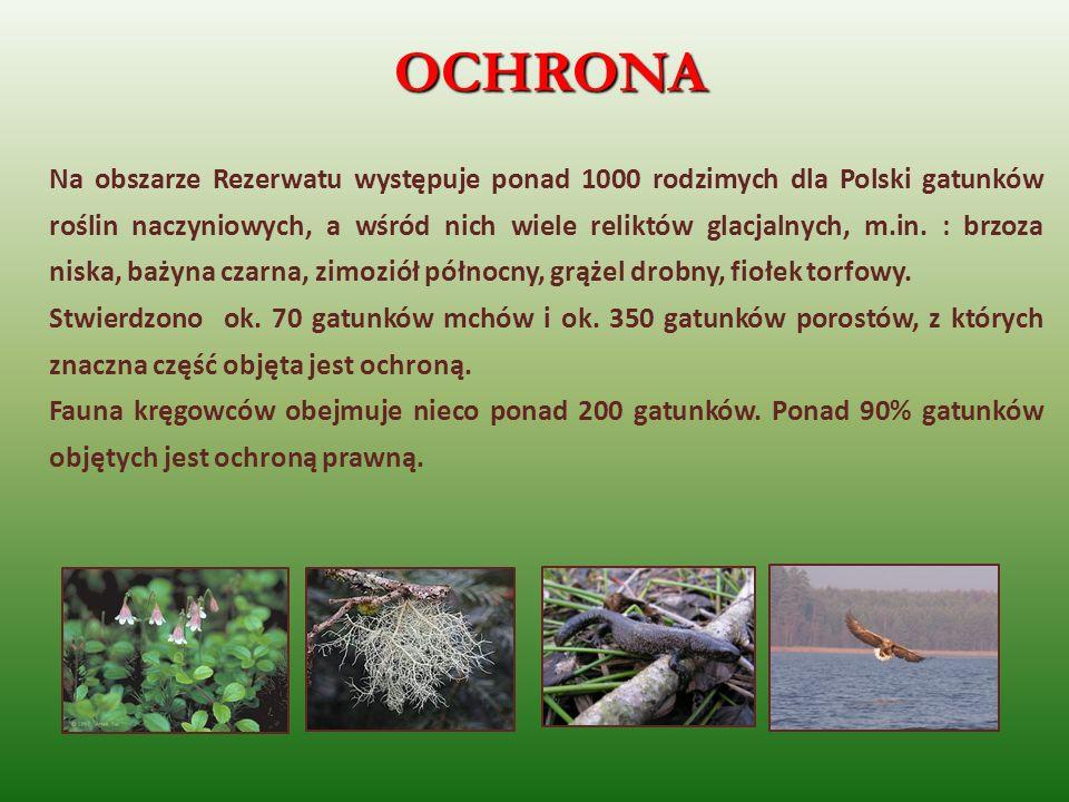 OCHRONA Na obszarze Rezerwatu występuje ponad 1000 rodzimych dla Polski gatunków roślin naczyniowych, a wśród nich wiele reliktów glacjalnych, m.in. :