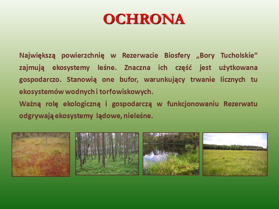 Największą powierzchnię w Rezerwacie Biosfery Bory Tucholskie zajmują ekosystemy leśne. Znaczna ich część jest użytkowana gospodarczo. Stanowią one bu