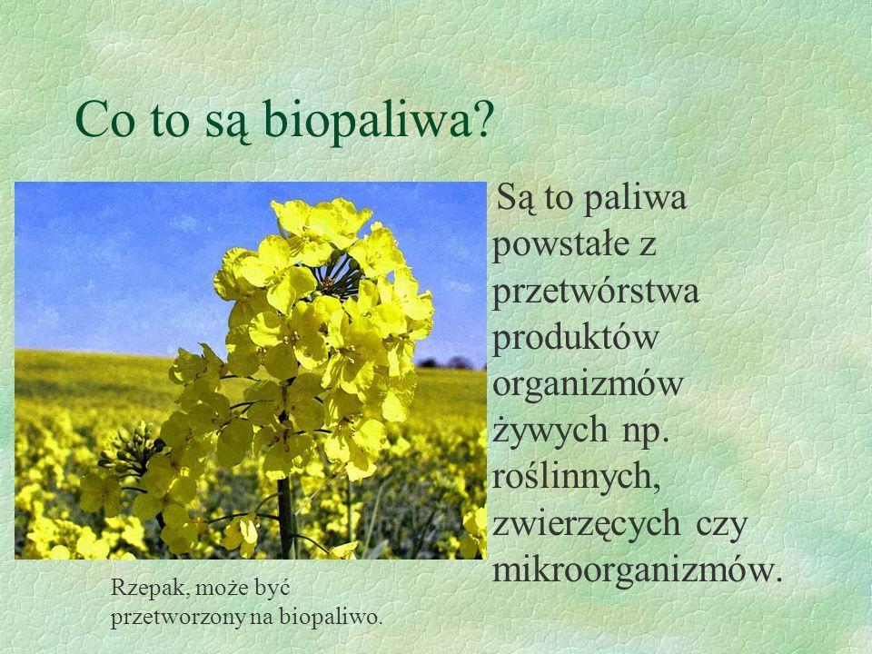 Co to są biopaliwa.Są to paliwa powstałe z przetwórstwa produktów organizmów żywych np.