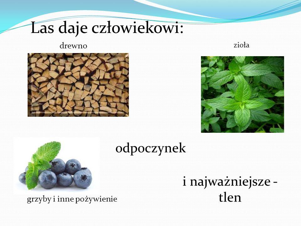 Las daje człowiekowi: drewno grzyby i inne pożywienie zioła i najważniejsze - tlen odpoczynek