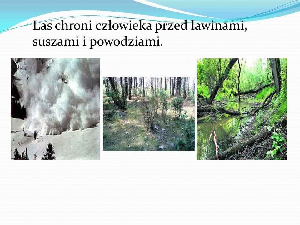 Las chroni człowieka przed lawinami, suszami i powodziami.