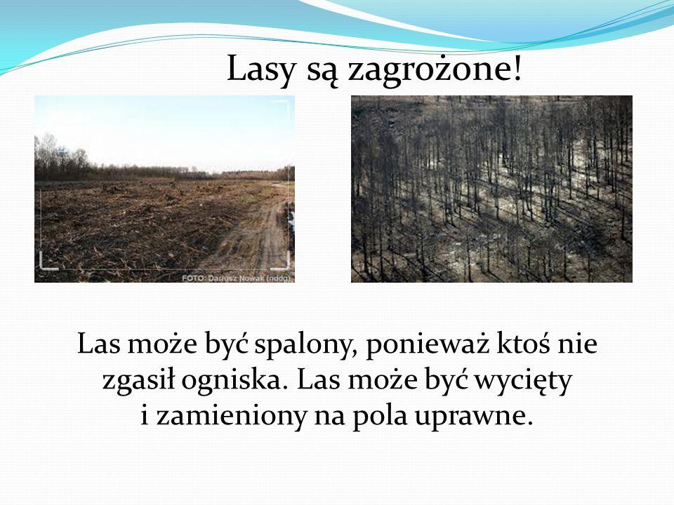 Lasy są zagrożone! Las może być spalony, ponieważ ktoś nie zgasił ogniska. Las może być wycięty i zamieniony na pola uprawne.