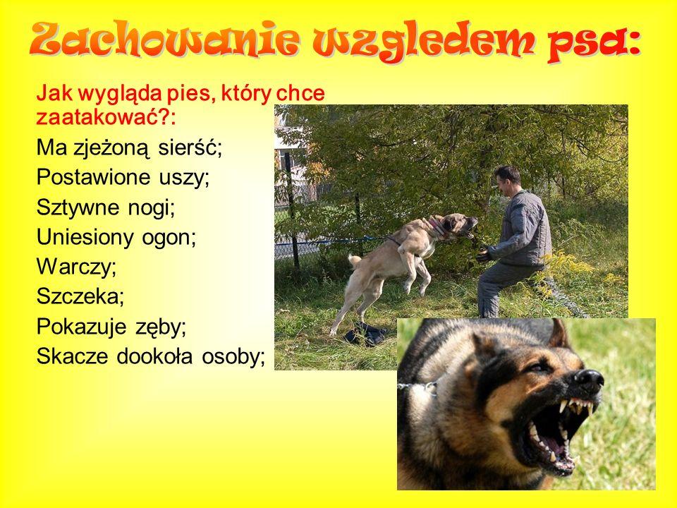 Jak wygląda pies, który chce zaatakować?: Ma zjeżoną sierść; Postawione uszy; Sztywne nogi; Uniesiony ogon; Warczy; Szczeka; Pokazuje zęby; Skacze doo